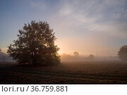 Morgenröte im Herbst. Стоковое фото, фотограф Zoonar.com/THOMAS RIESS / age Fotostock / Фотобанк Лори