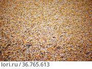 Die abgefallenen gelben Blätter eines Ginkgobaumes im Herbst. Стоковое фото, фотограф Zoonar.com/Bastian Kienitz / easy Fotostock / Фотобанк Лори