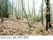 Zwischen Bäumen im Winter liegen Schneereste, Totholz und Laub. Стоковое фото, фотограф Zoonar.com/Bastian Kienitz / easy Fotostock / Фотобанк Лори