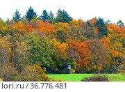 Kraichgau, Laubwald im Herbst bei Bretten, Feldweg, Стоковое фото, фотограф Zoonar.com/Bildagentur Geduldig / easy Fotostock / Фотобанк Лори
