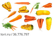 Set of various ripe organic carrot taproots isolated on white background... Стоковое фото, фотограф Zoonar.com/Valery Voennyy / easy Fotostock / Фотобанк Лори