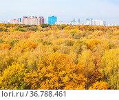 Yellow city park and urban houses on horizon on sunny autumn day. Стоковое фото, фотограф Zoonar.com/Valery Voennyy / easy Fotostock / Фотобанк Лори