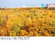 Yellow forest and apartment houses on horizon on sunny autumn day. Стоковое фото, фотограф Zoonar.com/Valery Voennyy / easy Fotostock / Фотобанк Лори