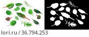 Microgreens or baby greens: Chard, Tat soi, Pak choi, Mizuna, Spinach... Стоковое фото, фотограф Zoonar.com/Max Tat / easy Fotostock / Фотобанк Лори