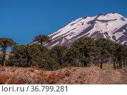 Der Lonquimay ist ein aktiver Vulkan zwischen den Nationalen Schutzgebieten... Стоковое фото, фотограф Zoonar.com/THOMAS RIESS / age Fotostock / Фотобанк Лори