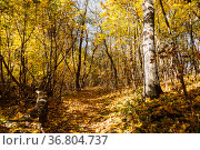 A path in an autumn park covered with fallen yellow leaves. Стоковое фото, фотограф Наталья Волкова / Фотобанк Лори