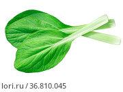 Bok choy, pak choi or pok choi, a Chinese chard (Brassica rapa subsp... Стоковое фото, фотограф Zoonar.com/Max Tat / easy Fotostock / Фотобанк Лори