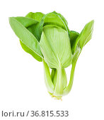 Green bok choy ( pak choi) Chinese cabbage isolated on white background... Стоковое фото, фотограф Zoonar.com/Valery Voennyy / easy Fotostock / Фотобанк Лори