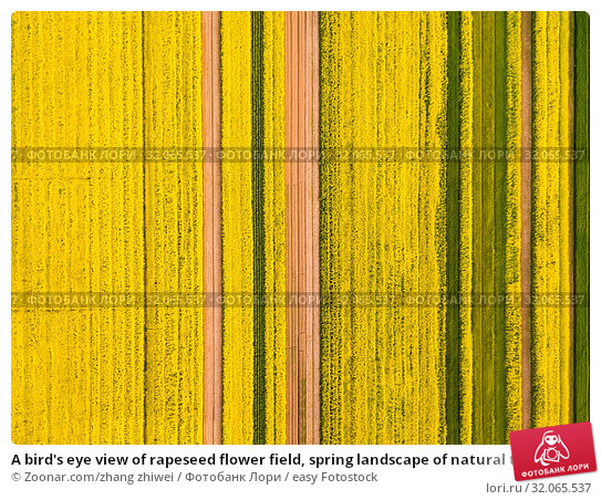 A bird's eye view of rapeseed flower field, spring landscape of natural texture background. Стоковое фото, фотограф Zoonar.com/zhang zhiwei / easy Fotostock / Фотобанк Лори