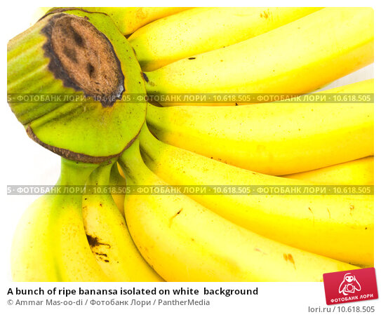 A bunch of ripe banansa isolated on white  background. Стоковое фото, фотограф Ammar Mas-oo-di / PantherMedia / Фотобанк Лори