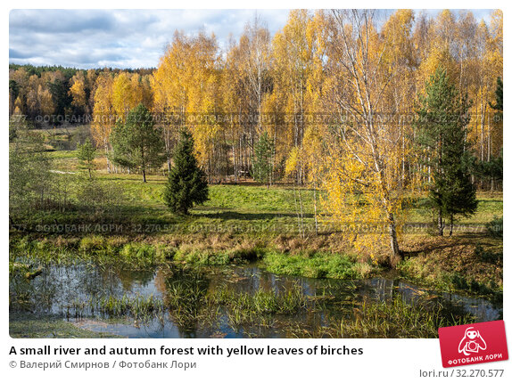 Купить «A small river and autumn forest with yellow leaves of birches», фото № 32270577, снято 5 октября 2019 г. (c) Валерий Смирнов / Фотобанк Лори