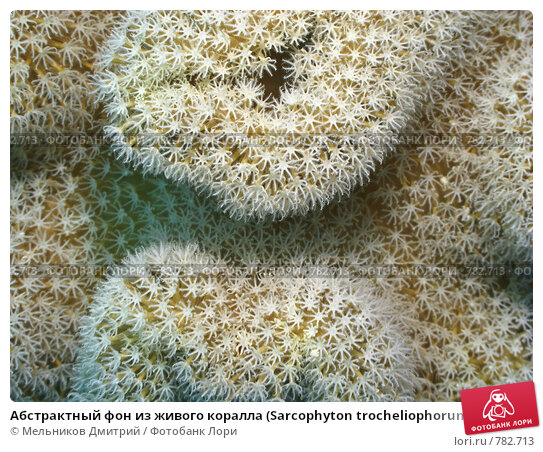 Купить «Абстрактный фон из живого коралла (Sarcophyton trocheliophorum). Подводная съемка», фото № 782713, снято 16 ноября 2008 г. (c) Мельников Дмитрий / Фотобанк Лори