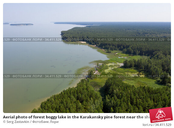 Aerial photo of forest boggy lake in the Karakansky pine forest near the shore of the Ob reservoir. Стоковое фото, фотограф Serg Zastavkin / Фотобанк Лори