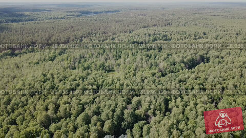 Купить «Aerial view of picturesque forest landscape in central Russia on summer day», видеоролик № 28936169, снято 28 июня 2018 г. (c) Яков Филимонов / Фотобанк Лори