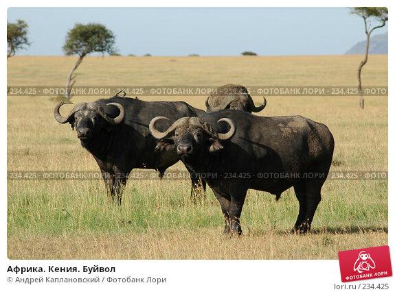 Африка. Кения. Буйвол, фото № 234425, снято 15 февраля 2005 г. (c) Андрей Каплановский / Фотобанк Лори