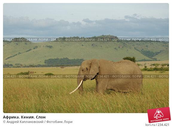 Африка. Кения. Слон, фото № 234421, снято 15 февраля 2005 г. (c) Андрей Каплановский / Фотобанк Лори