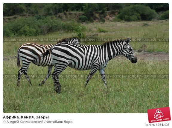 Африка. Кения. Зебры, фото № 234405, снято 13 февраля 2005 г. (c) Андрей Каплановский / Фотобанк Лори