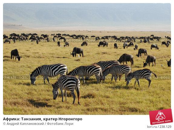Африка: Танзания, кратер Нгоронгоро, фото № 238129, снято 18 февраля 2005 г. (c) Андрей Каплановский / Фотобанк Лори