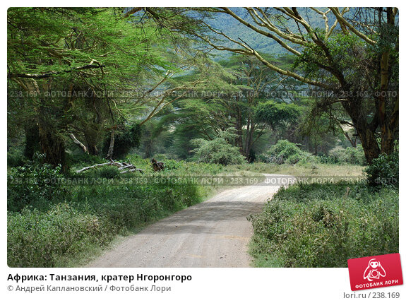 Купить «Африка: Танзания, кратер Нгоронгоро», фото № 238169, снято 18 февраля 2005 г. (c) Андрей Каплановский / Фотобанк Лори