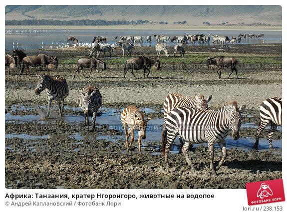 Африка: Танзания, кратер Нгоронгоро, животные на водопое, фото № 238153, снято 18 февраля 2005 г. (c) Андрей Каплановский / Фотобанк Лори