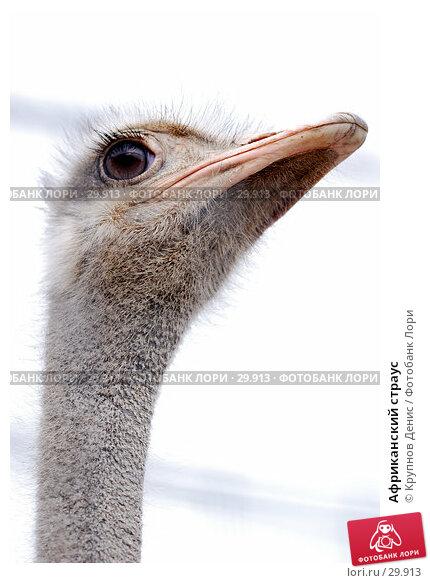 Африканский страус, фото № 29913, снято 4 марта 2007 г. (c) Крупнов Денис / Фотобанк Лори