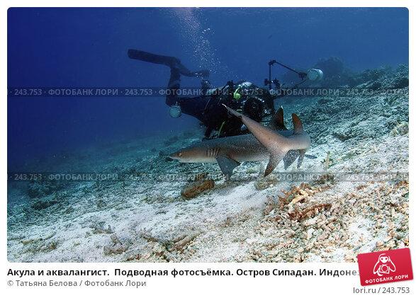 Купить «Акула и аквалангист.  Подводная фотосъёмка. Остров Сипадан. Индонезия», фото № 243753, снято 14 марта 2008 г. (c) Татьяна Белова / Фотобанк Лори