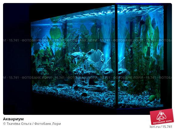 Купить «Аквариум», фото № 15741, снято 18 декабря 2006 г. (c) Ткачёва Ольга / Фотобанк Лори