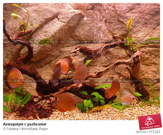 Аквариум с рыбками, фото № 117221, снято 11 ноября 2007 г. (c) Галина Щеглова / Фотобанк Лори