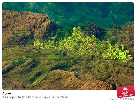 Купить «Algae », фото № 10532669, снято 26 мая 2019 г. (c) PantherMedia / Фотобанк Лори