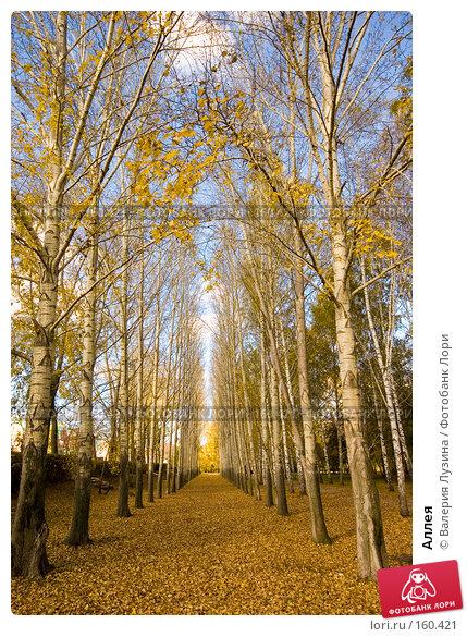 Купить «Аллея», фото № 160421, снято 2 октября 2007 г. (c) Валерия Потапова / Фотобанк Лори