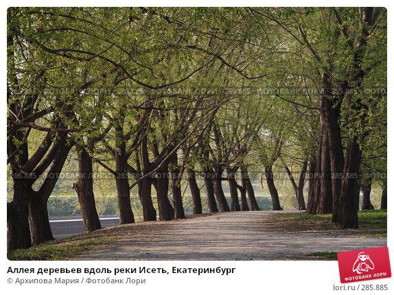Купить «Аллея деревьев вдоль реки Исеть, Екатеринбург», фото № 285885, снято 14 мая 2008 г. (c) Архипова Мария / Фотобанк Лори