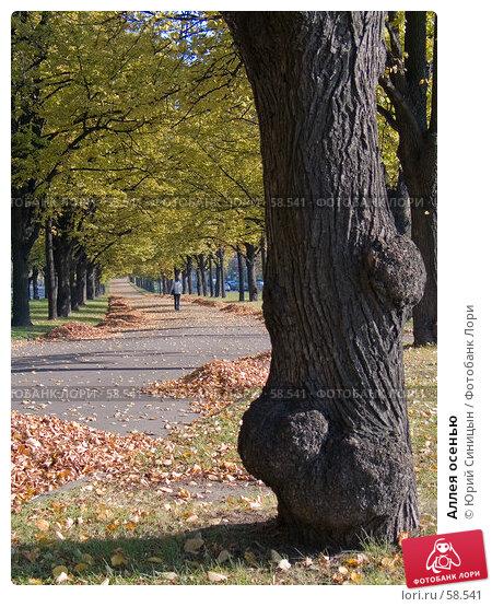 Аллея осенью, фото № 58541, снято 16 октября 2004 г. (c) Юрий Синицын / Фотобанк Лори