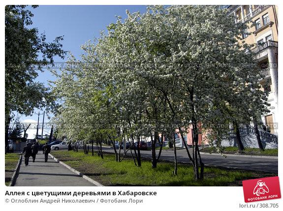 Аллея с цветущими деревьями в Хабаровске, фото № 308705, снято 26 мая 2004 г. (c) Оглоблин Андрей Николаевич / Фотобанк Лори