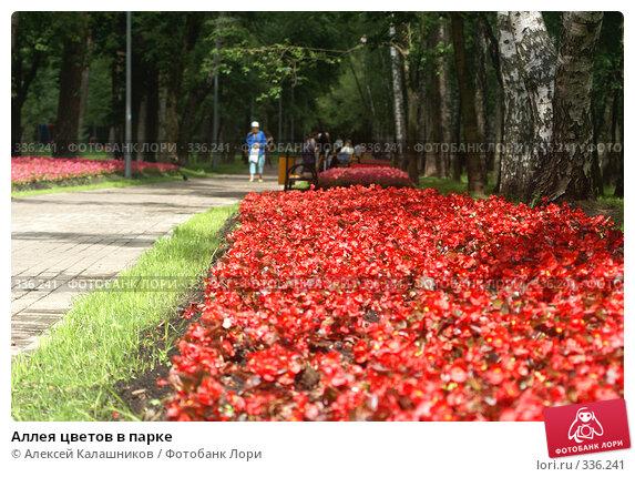 Аллея цветов в парке, фото № 336241, снято 26 июня 2008 г. (c) Алексей Калашников / Фотобанк Лори