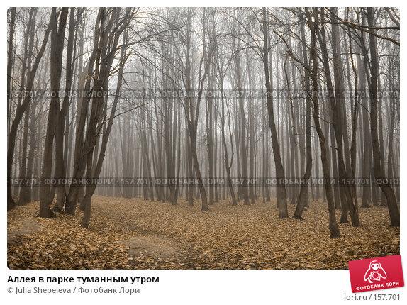Купить «Аллея в парке туманным утром», фото № 157701, снято 30 октября 2007 г. (c) Julia Shepeleva / Фотобанк Лори