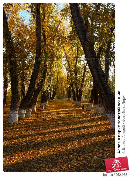Аллея в парке золотой осенью, фото № 262953, снято 3 октября 2006 г. (c) Шахов Андрей / Фотобанк Лори