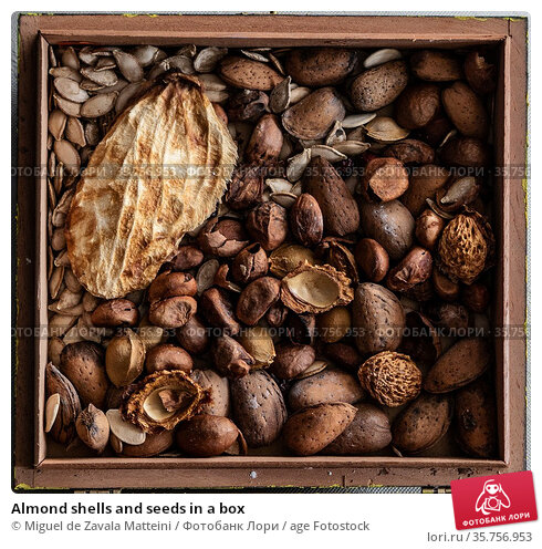 Almond shells and seeds in a box. Стоковое фото, фотограф Miguel de Zavala Matteini / age Fotostock / Фотобанк Лори