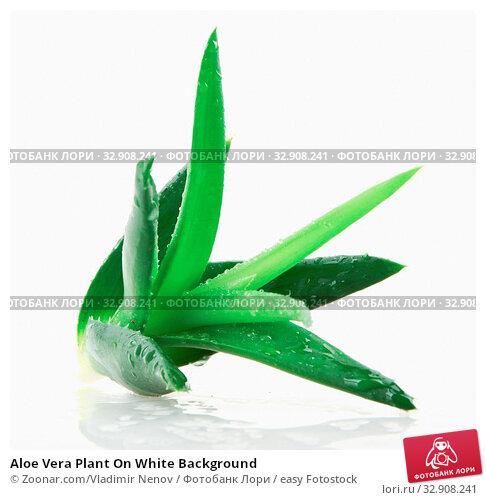 Aloe Vera Plant On White Background. Стоковое фото, фотограф Zoonar.com/Vladimir Nenov / easy Fotostock / Фотобанк Лори