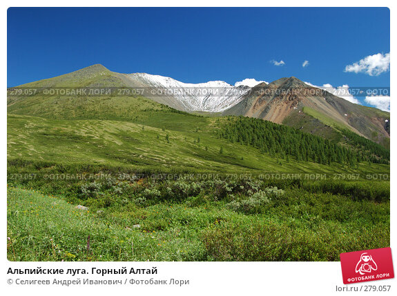 Альпийские луга. Горный Алтай, фото № 279057, снято 8 июля 2006 г. (c) Селигеев Андрей Иванович / Фотобанк Лори