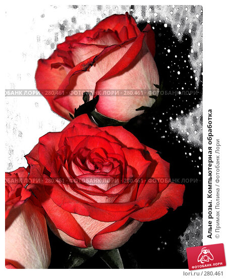 Алые розы. Компьютерная обработка, фото № 280461, снято 8 февраля 2007 г. (c) Примак Полина / Фотобанк Лори