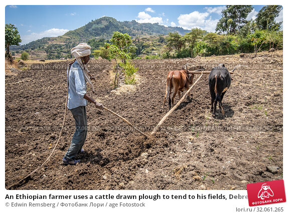 An Ethiopian farmer uses a cattle drawn plough to tend to his fields, Debre Berhan, Ethiopia. (2019 год). Редакционное фото, фотограф Edwin Remsberg / age Fotostock / Фотобанк Лори