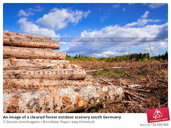 An image of a cleared forest outdoor scenery south Germany. Стоковое фото, фотограф Zoonar.com/magann / easy Fotostock / Фотобанк Лори