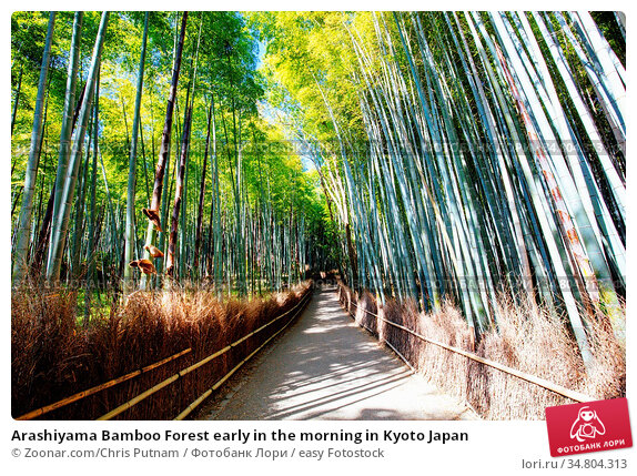 Arashiyama Bamboo Forest early in the morning in Kyoto Japan. Стоковое фото, фотограф Zoonar.com/Chris Putnam / easy Fotostock / Фотобанк Лори