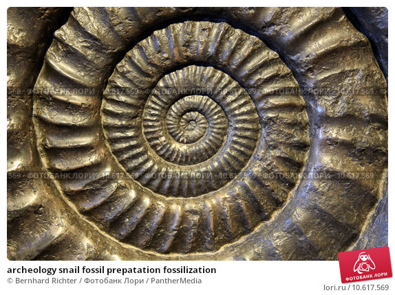 a term paper on fossilization