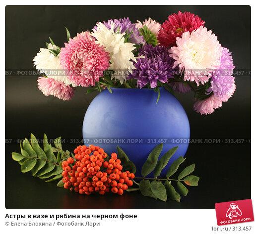 Купить «Астры в вазе и рябина на черном фоне», фото № 313457, снято 12 сентября 2007 г. (c) Елена Блохина / Фотобанк Лори