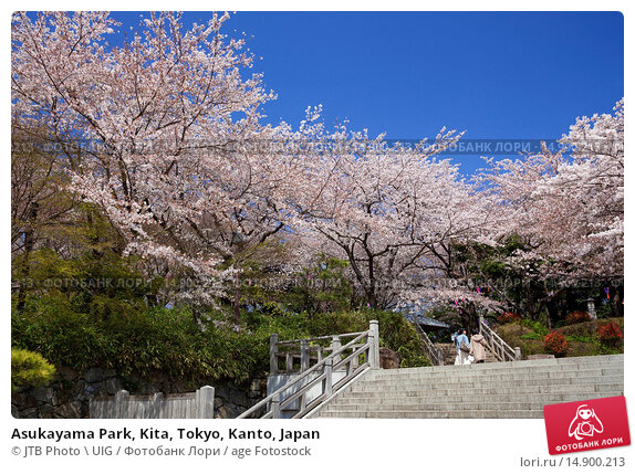 Купить «Asukayama Park, Kita, Tokyo, Kanto, Japan», фото № 14900213, снято 19 июня 2018 г. (c) age Fotostock / Фотобанк Лори