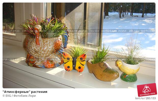 """""""Атмосферные"""" растения, фото № 283133, снято 2 января 2008 г. (c) EXG / Фотобанк Лори"""