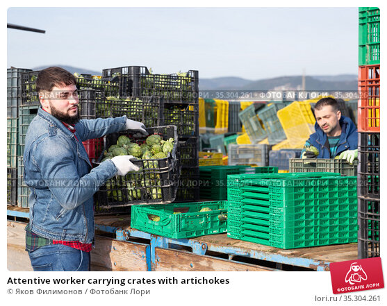 Attentive worker carrying crates with artichokes. Стоковое фото, фотограф Яков Филимонов / Фотобанк Лори