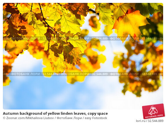 Купить «Autumn background of yellow linden leaves, copy space», фото № 32544889, снято 7 декабря 2019 г. (c) easy Fotostock / Фотобанк Лори