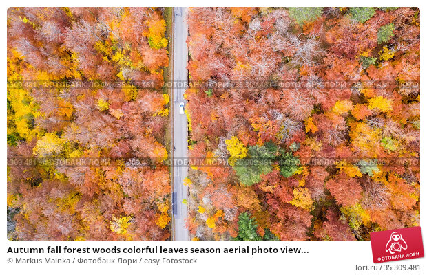 Autumn fall forest woods colorful leaves season aerial photo view... Стоковое фото, фотограф Markus Mainka / easy Fotostock / Фотобанк Лори